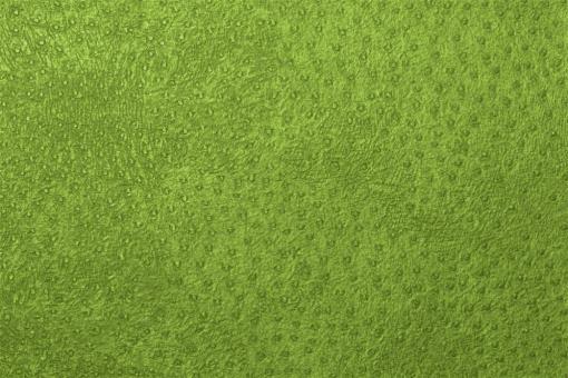 Leder-Imitat Waterproof - Baby-Strauß Hellgrün